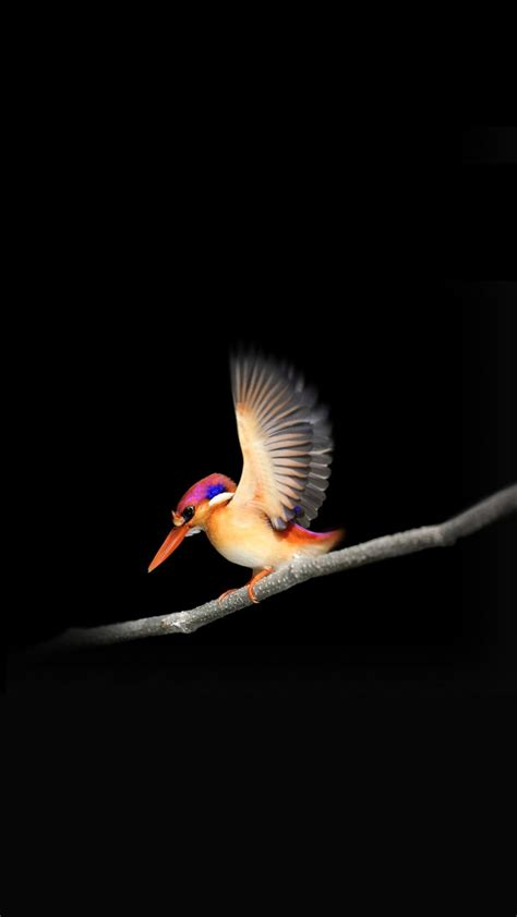 woodpecker microsoft surface  wallpapers hd wallpapers