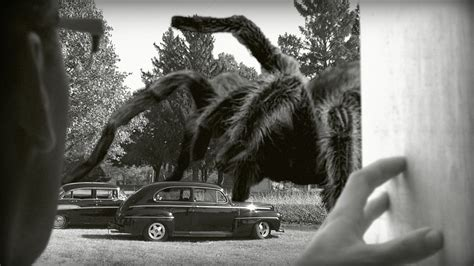 film giant spiders the giant spider filmmonthly