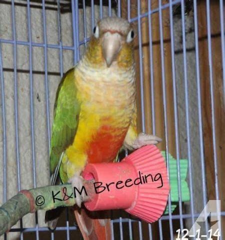 birds for sale for sale in breezewood park indiana