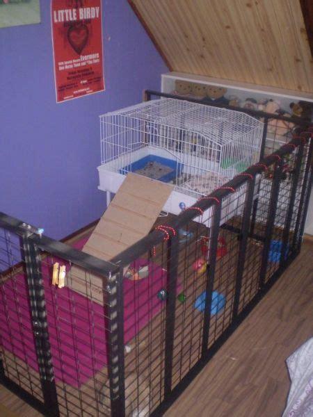 rabbit indoor play  gallery inspiration
