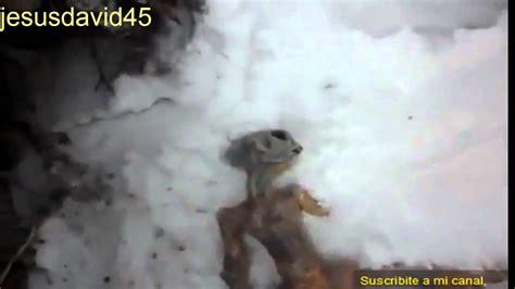 imagenes reales yeti extraterrestre real encontrado muerto en rusia abril 2011