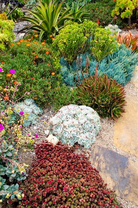 Succulent Rock Garden Succulent Rock Garden On Succulents Gardening And Succulents Garden