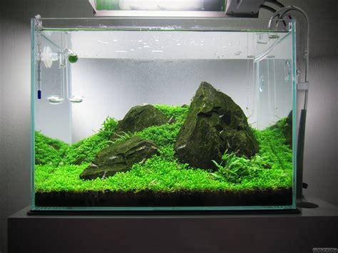 nano aquascape iwagumi underwater landscape living art iwagumi