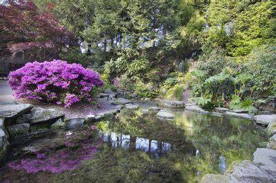 wann schneidet rhododendron rhododendron pflanzzeit 187 wann ist die beste zeit zum