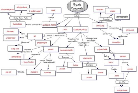 carbohydrates key terms concept map organic compounds key biochemistry