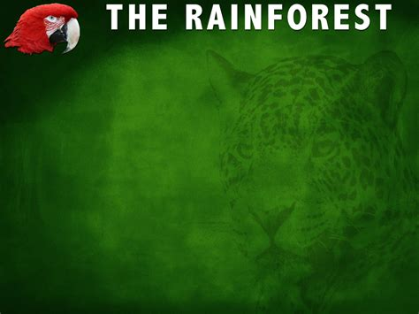 template forest free the rainforest powerpoint template 3 adobe education