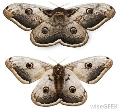 how do i get rid of moths in my bedroom how do i get rid of moths with pictures