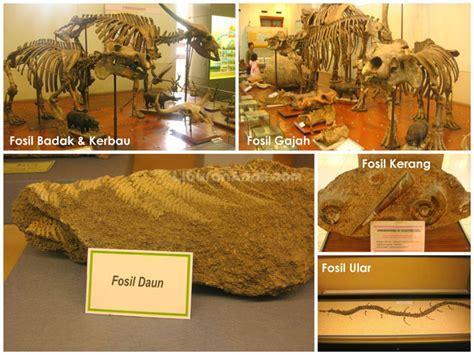Fosil Kerang Raksasa museum geologi spots liburan anak