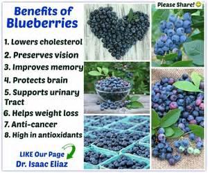 Blueberry benefits health amp fitness pinterest