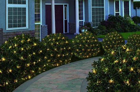 christmas light blue bushes lights for bushes prep