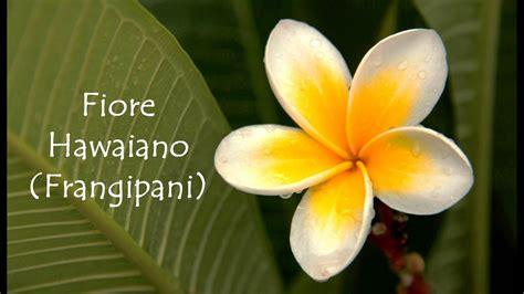 fiori hawaiani tutorial fiore hawaiano frangipani