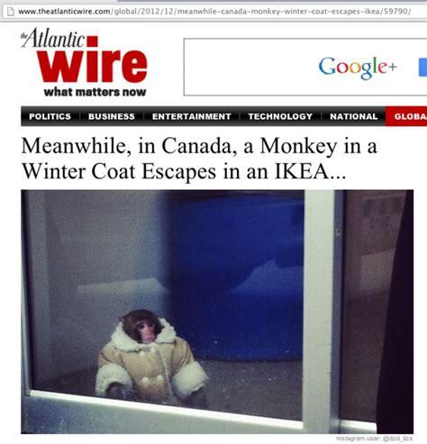 Ikea Meme - ikea monkey meme carl image memes at relatably com