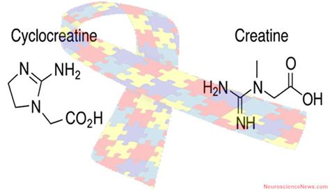 x linked creatine transporter deficiency researchers report success in treating autism spectrum