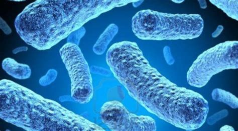 microbiologia molecolare dipartimento di biologia e
