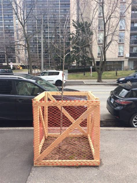 reddit what is this tree this tree protection zone is made of irony trending on