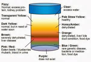 color of urine urine color meaning brown orange black purple etc