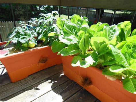 orto terrazza coltivare sul terrazzo orto in balcone orto sul