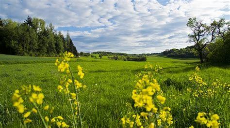 baum im garten pflanzen 2760 kostenloses foto wiese blumen fr 252 hlingswiese