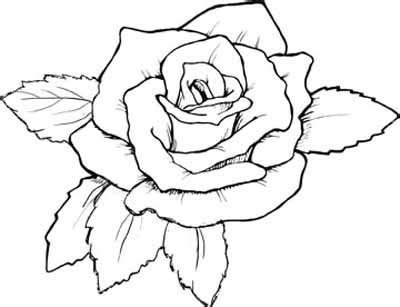 free printable coloring pages of a rose more roses coloring pages