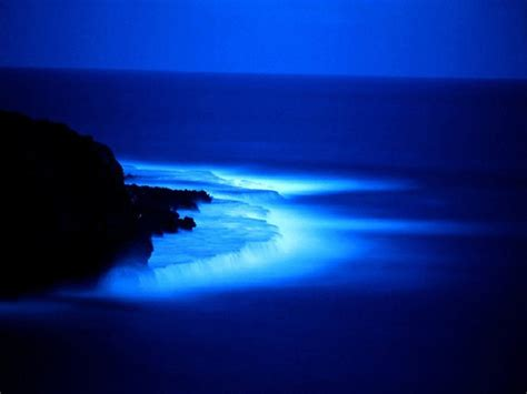 Bioluminescent L by Albums Photos Que La Lumi 232 Re Soit