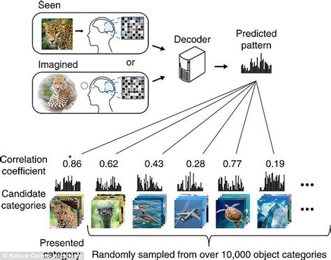 ai pattern models new ai can decode brain activity to identify objects