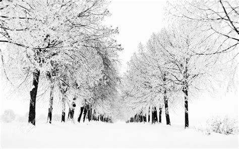 fond d 233 cran des arbres dessin monochrome neige