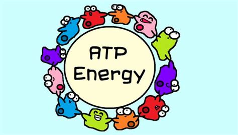 workshop 8 carbohydrates and lipids all cells to make atp energy but the way that they