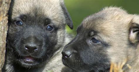 fleas on newborn puppies fotolia 1414585 xs jpg w 1200 h 630 crop min 1