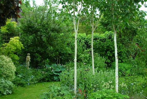 Garden Trees by In The Garden Creative Home