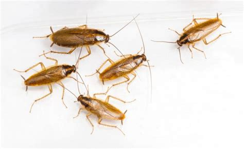 how to prevent cockroaches in bedroom how to get rid of roaches in the bathroom how to get rid