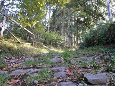 uphill backyard landscaping uphill backyard landscaping 28 images shady woodland