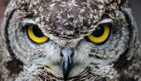 22 owls who are trying really hard to hypnotize you right now