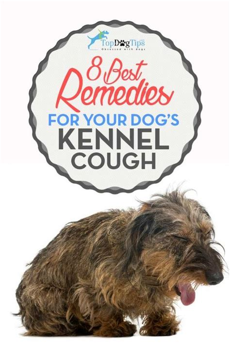 top remedies for canine kennel cough dogs
