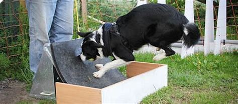 how to your for flyball flyball sport for teams of dogs and handlers