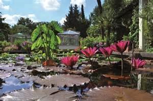 erlangen botanischer garten botanischer garten die fr 228 nkischen st 228 dte
