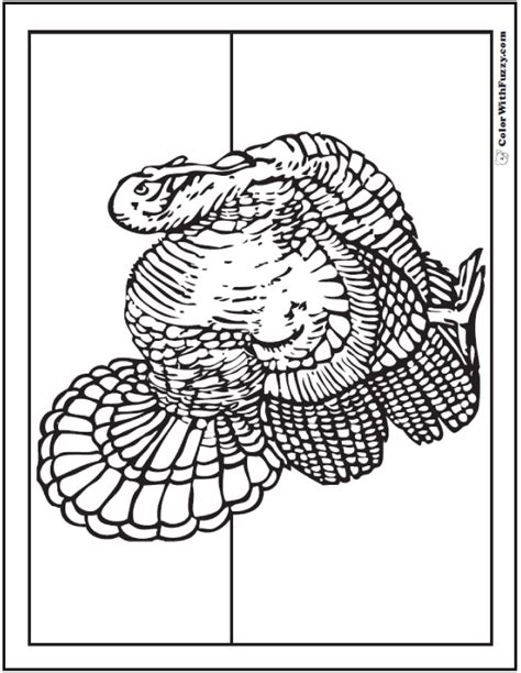 printable wild turkey picture 30 turkey coloring pages interactive pdfs