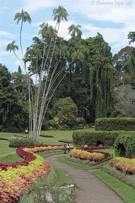 Kandy Botanical Gardens Kandy Botanical Gardens Jpg Photo David Behrens Photos At Pbase