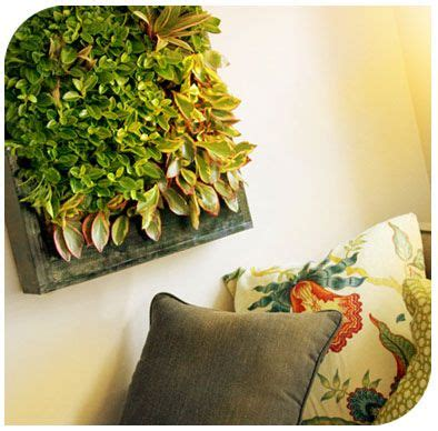 Bright Green Living Wall Planter by 22 Best Images About Terrariums And The Like On