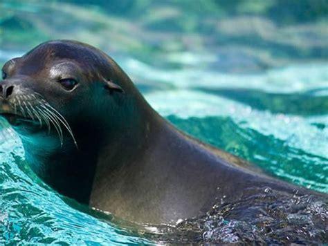 imagenes de animales que viven en el mar conoce a los mam 237 feros que viven mar video y fotos