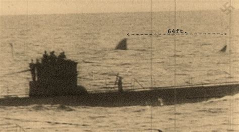 german u boats south africa as shark week looms so might giant megalodon grindtv