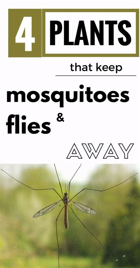 plants to keep mosquitoes away 1000 ideas about keeping flies away on pinterest plants