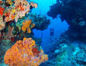 dive destinations dive destinations our staff picks let s talk adventure