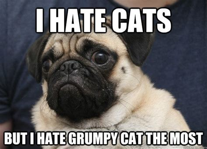 Pugs Meme - i hate cats but i hate grumpy cat the most grumpy pug