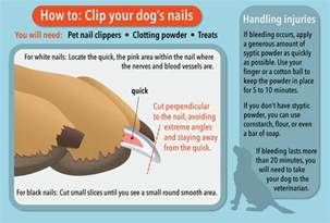 how can i trim my dog s toenails dogs amp puppies