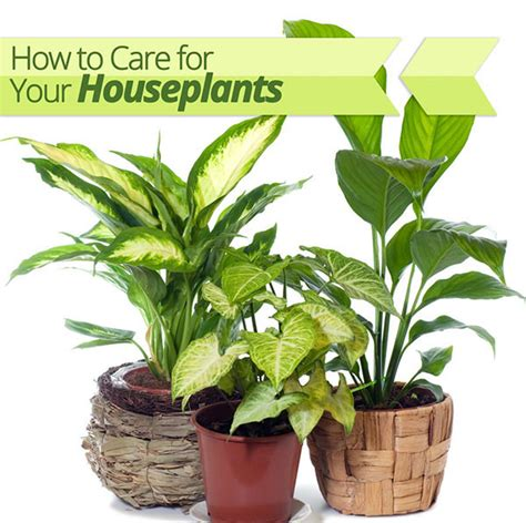 common house plants and how to care for them how to care for your houseplants homes