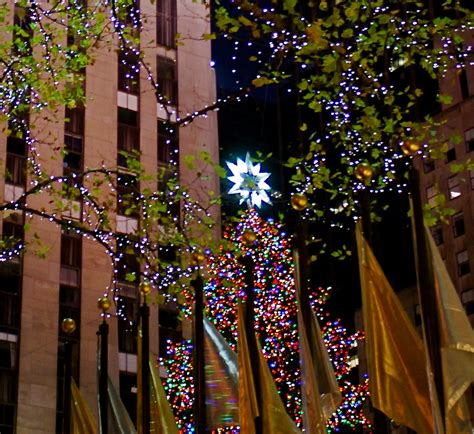 nyc nyc christmas trees in manhattan
