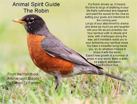 17 best images about spiritual animals birds meanings