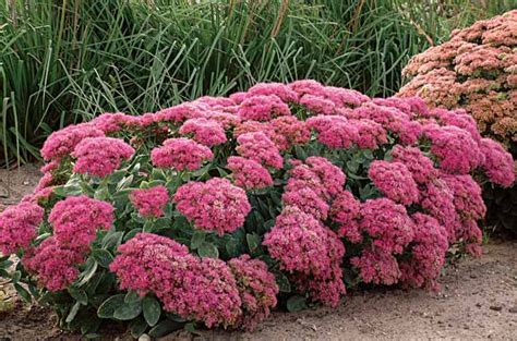 top 28 all year plants and flowers all year round