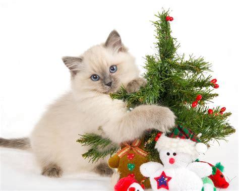 un gato y un un gato y arbolito de navidad hd 1280x1024 imagenes wallpapers gratis animales fondos de