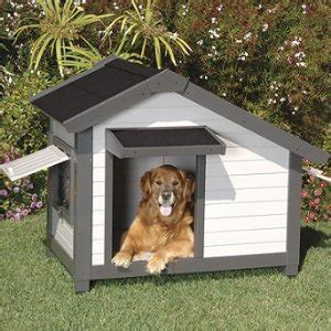 dogs home unique houses gallery spoil rover with a house he can be proud of